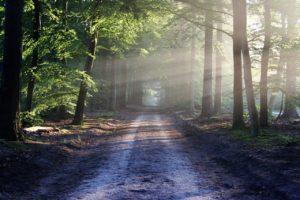 Das effektivste Mittel gegen Stress – Die Natur!